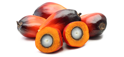 Image to represent Sustainable Palm Oil
